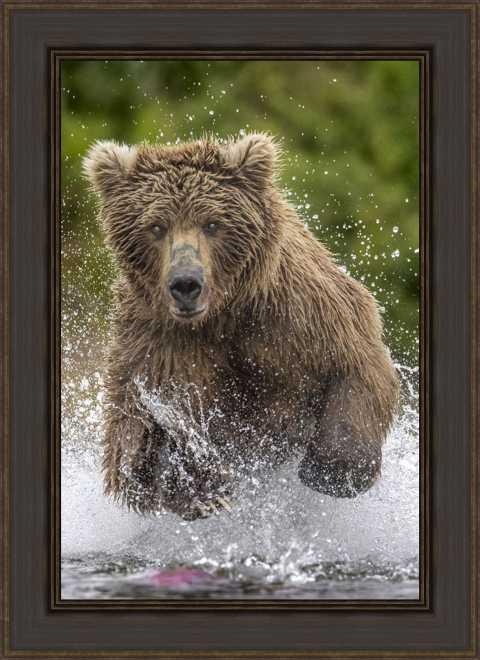 Alaska Bear by Art Wolfe