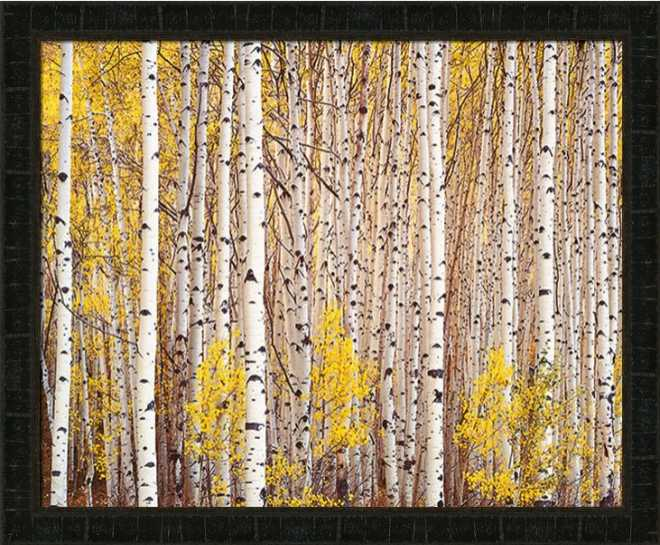 Aspen Grove Colorado