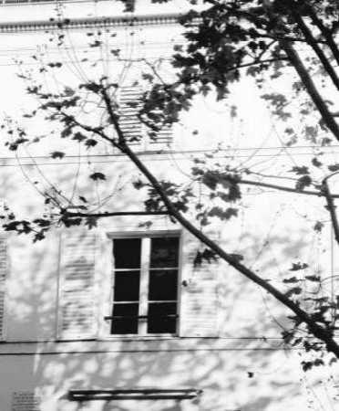 Autumn Shadows II