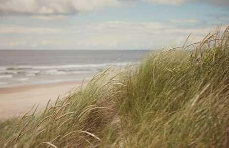 Beach Grass I
