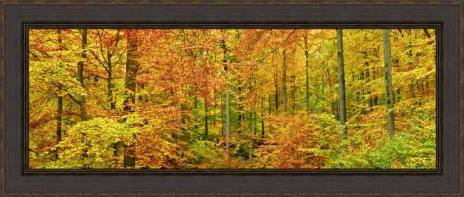 Beech Forest in Autumn by Frank Krahmer