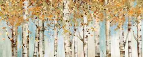Birch Country