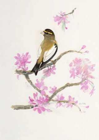 Bird in Brown