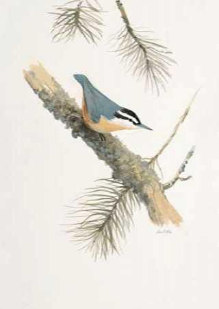 Bird in Grey