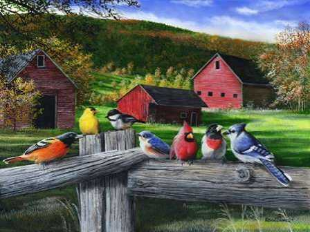 Birds at the Barn
