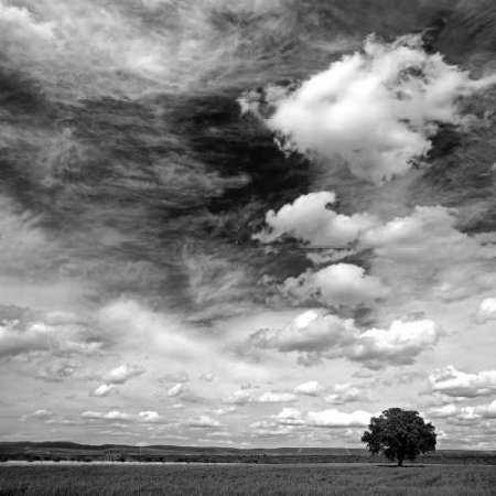Black and white field 841
