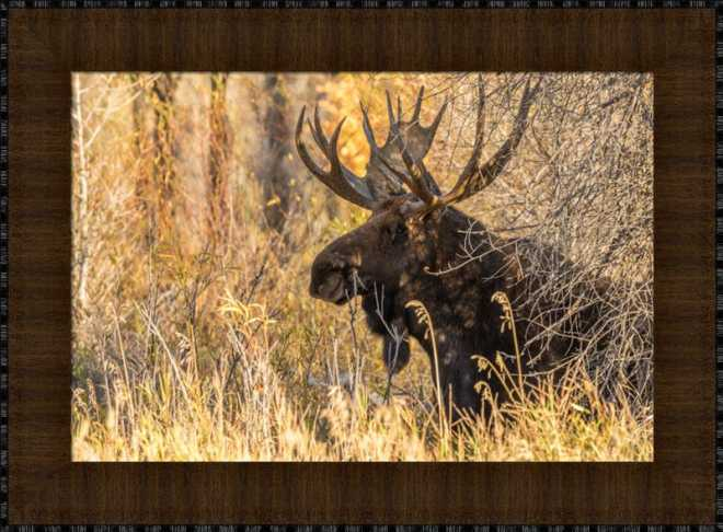 Black Antler Moose by Tom Tietz