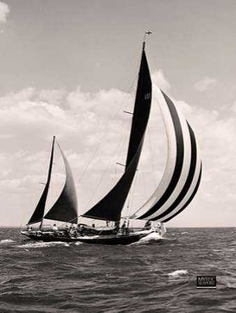 Bloodhounds Sails