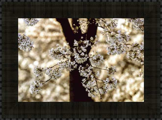 Blossom in White
