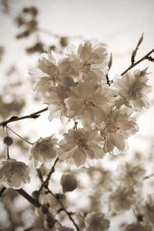 Blossom Twig 1