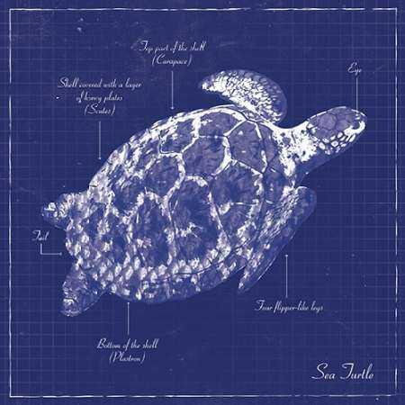 BLUEPRINT SEA TURTLE
