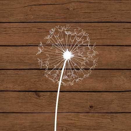 Brown Dandelion I
