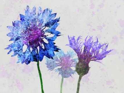 Colorful Cornflowers 1