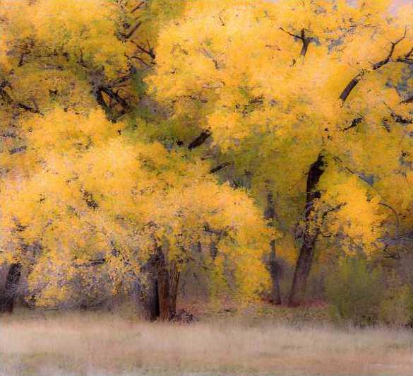 Cottonwood Jemez New Mexico