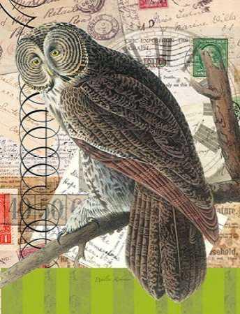 Curious Owl 1