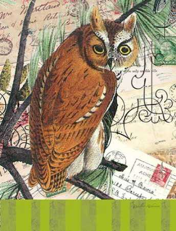 Curious Owl 2