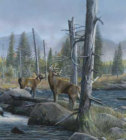 Elk Call