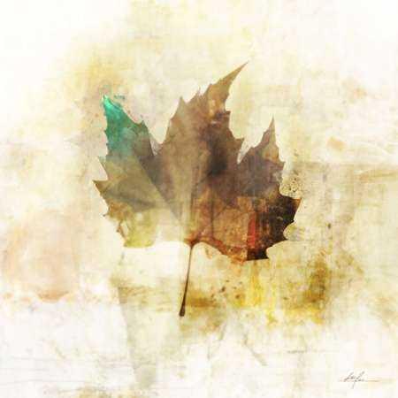 Falling Maple Leaf 1