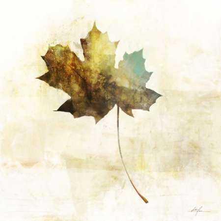 Falling Maple Leaf 2