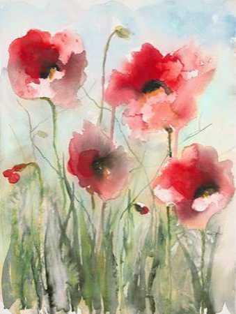 Field Poppies 2