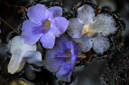 Floral Pond 2