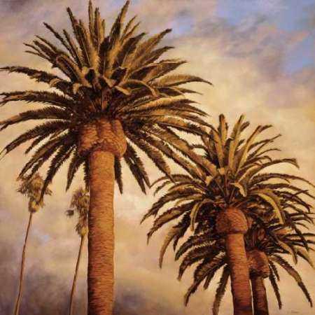 Fog Over Canary Palms