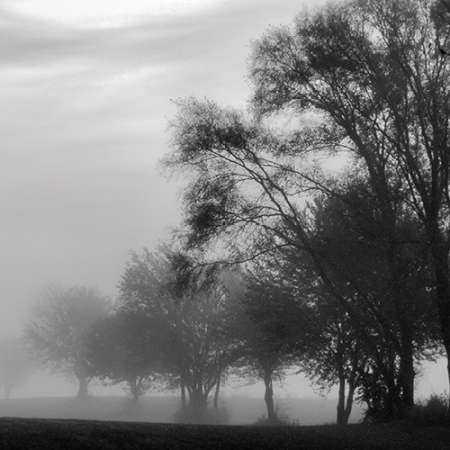 Fog Through the Trees II