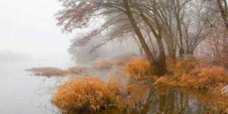 Foggy swamp 836