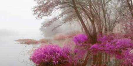Foggy swamp 838