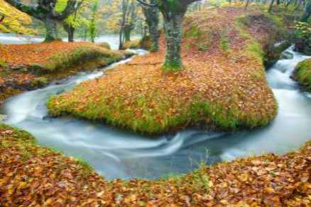 Forest and river 846