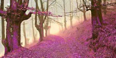 Forest in purple 827