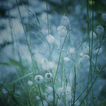Garden Dreams 5