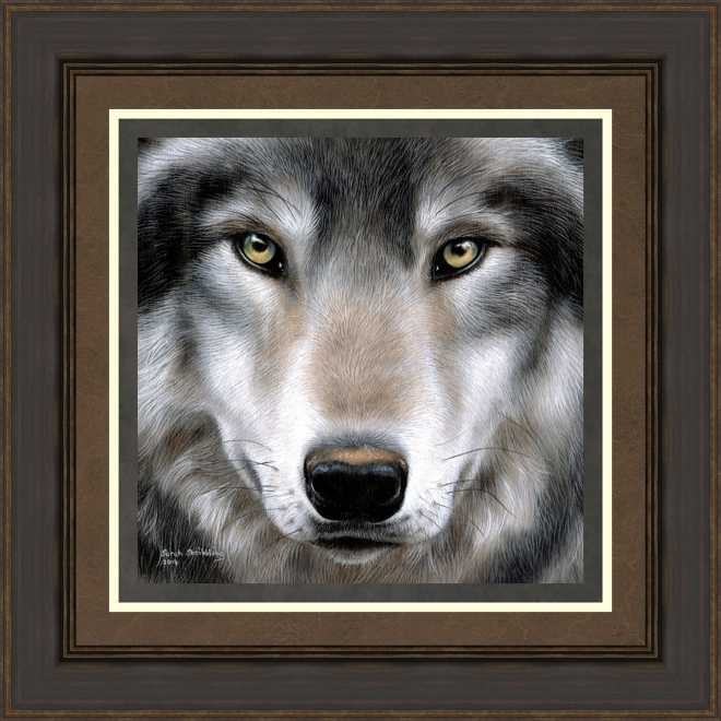 Gray Wolf Portrait by Sarah Stribbling