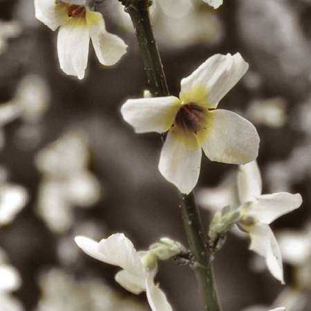 Hint of Spring VI