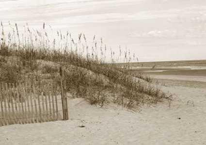 In the Dunes 1