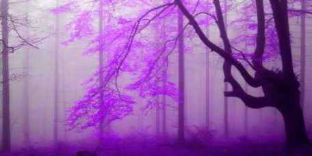 Lilac forest 808