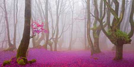 Lilac forest 812