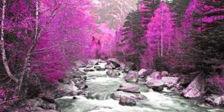 Lilac river and trees 832