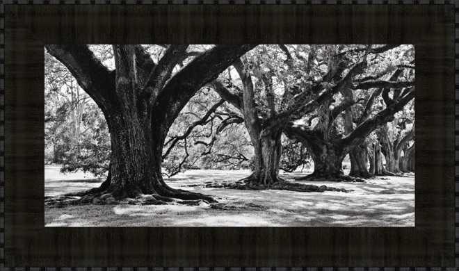 Majestic Oaks I