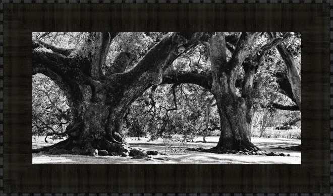 Majestic Oaks II
