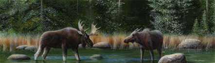 Moose Panoramic I