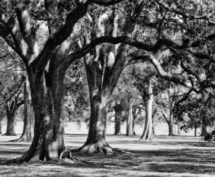 Oak Grove II