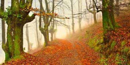 Orange forest leaves 826