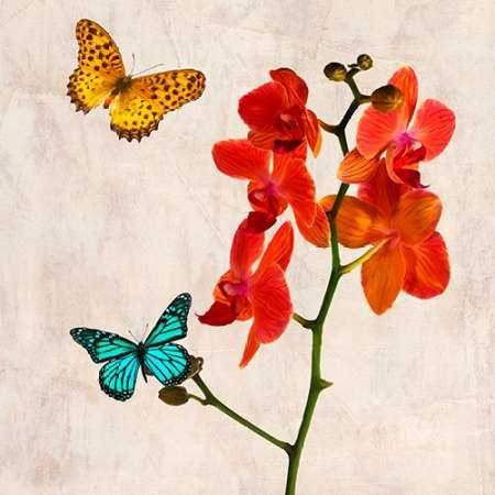 Orchids and Butterflies II