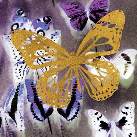 Raining Butterflies 2
