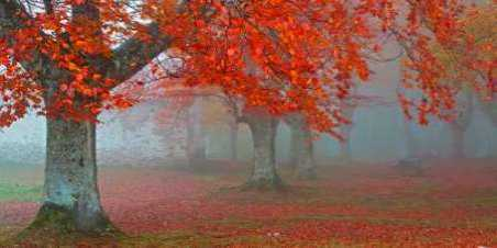 Red forest 804