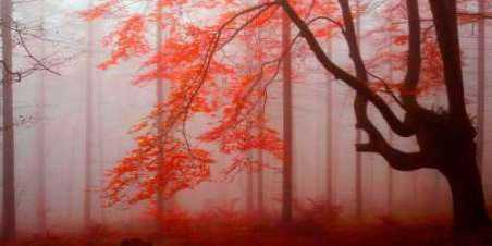 Red forest 807