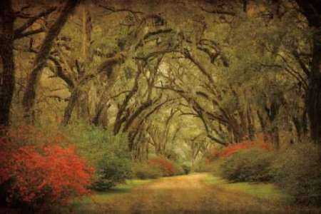 Road Lined With Oaks and Flowers