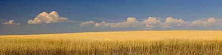 S. Dakota Prairie 1