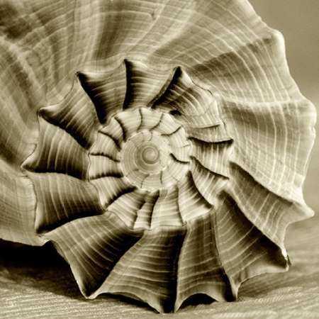Sepia Shell Life 3